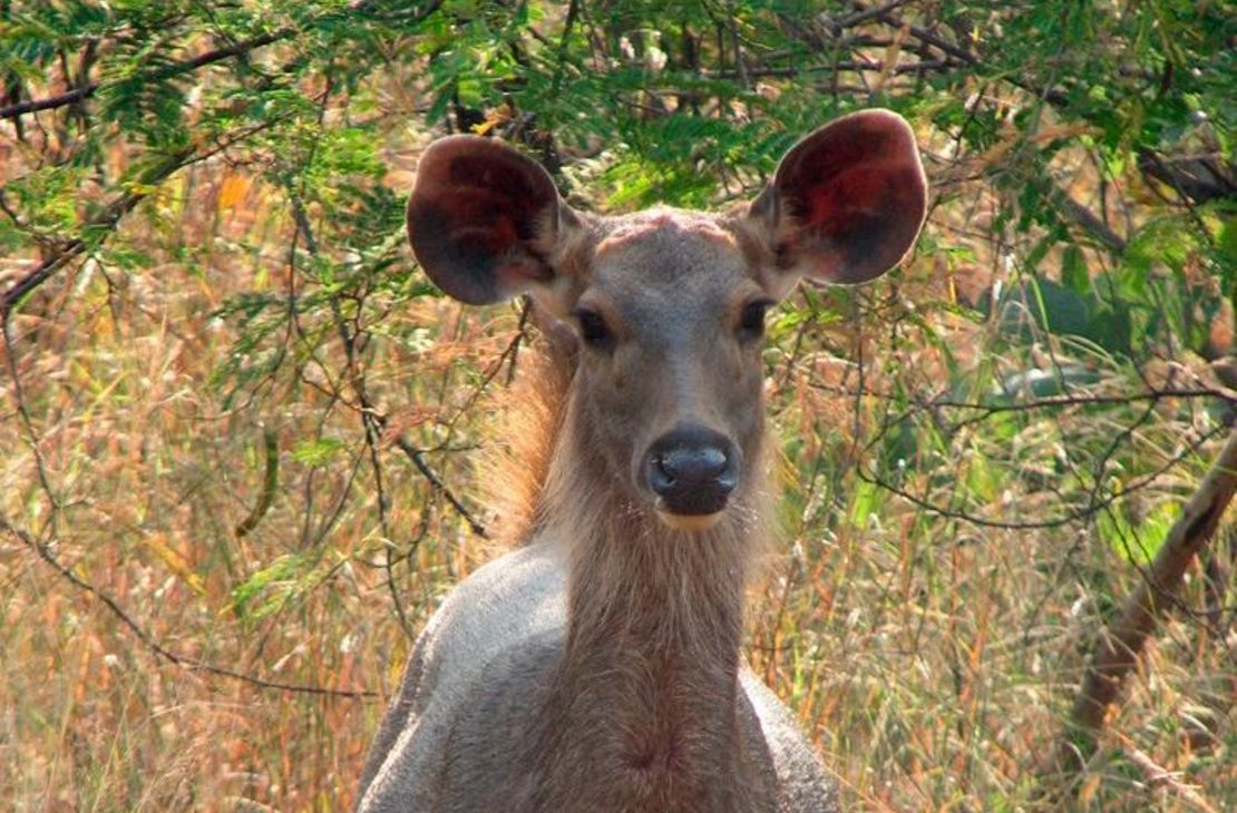 Pashan Garh Wilderness Lodge - Deer Panna NP - India