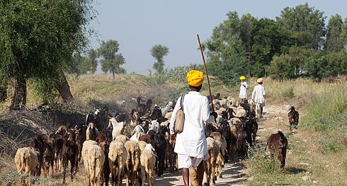 Men and Goats - India - Bram Deurloo