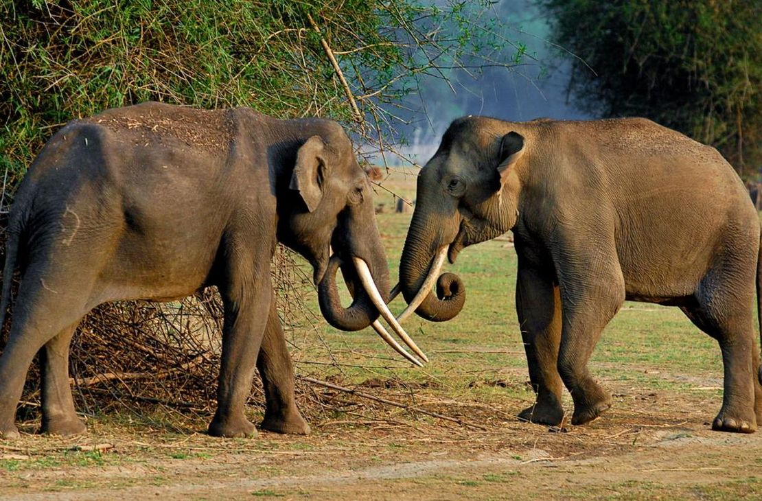 Orange County Kabini - Elephants - India