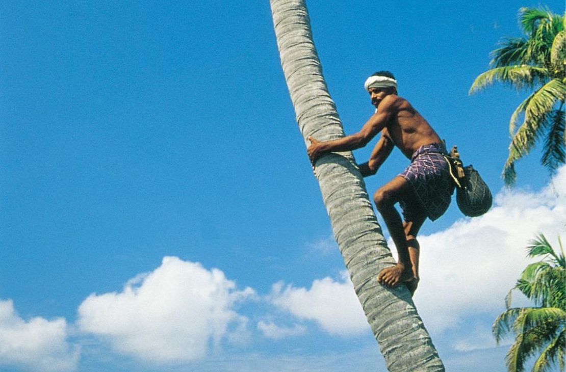Kumarakom Lake Resort - Man in Palm Tree - India