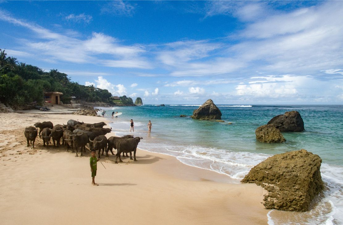 Nihiwatu Sumba Island beach with buffalo - Indonesie
